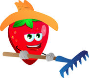 Gardener strawberry with rake Stock Image