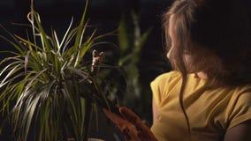 Gardener Takes Care of Plant stock video