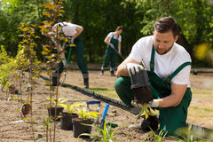Gardener  taking the flower from the pot Royalty Free Stock Photography
