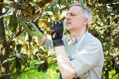 Gardener thinking to prune a tree Stock Photos