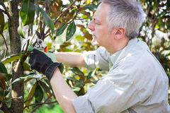 Gardener thinking to prune a tree Royalty Free Stock Photo