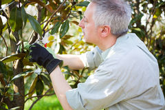 Gardener thinking to prune a tree Stock Images