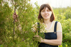 Gardener in thuja plant Royalty Free Stock Photography