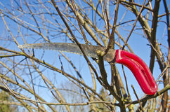 Gardener tool handsaw on apple tree branch Royalty Free Stock Photography
