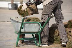 The gardener is transporting a roll of grass in the wheelbarrow for lawn landscaping royalty free stock photos