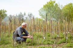 Gardener treats young plants. Hotbed of plants. stock image