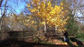 Gardener tree leaves pile stock video