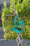 Gardener trimming the foliage on a tree Royalty Free Stock Photos