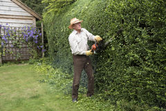 Gardener trimming a garden hedge Stock Photography