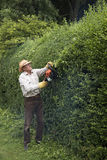Gardener trimming a garden hedge Royalty Free Stock Photo