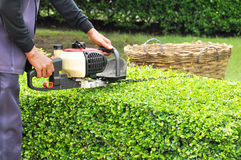 A gardener trimming green bush with trimmer machine. Gardener trimming hedge with trimmer machine in the garden Royalty Free Stock Image