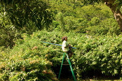 A gardener trimming a hedge in the caribbean Stock Photos