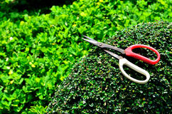 Gardener trimming hedge in the tree. Close up gardener trimming hedge in the tree Stock Photography