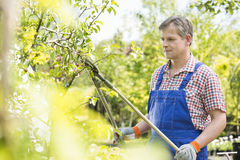 Gardener trimming tree branches at plant nursery Royalty Free Stock Images