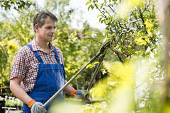 Gardener trimming tree branches at plant nursery Stock Photos