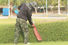Gardener trimming the tree. Stock Photos