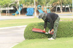 Gardener trimming the tree. Stock Image