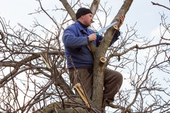 Gardener trims garden hand saw. A gardener in the blue jacket sitting in a tree Stock Images