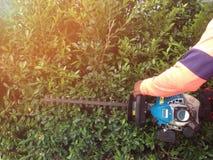 Gardener use equipment for trim wall tree. Gardening and cutting activities. stock photo