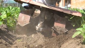 Hilling potatoes. A gardener uses a motor cultivator to hilling potatoes. Slow motion stock video