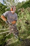 Gardener using a chainsaw. Action royalty free stock image