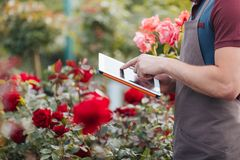 Gardener using digital tablet while standing in greenhouse. Partial view of gardener using digital tablet while standing in greenhouse Royalty Free Stock Images