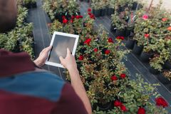 Gardener using digital tablet while standing in greenhouse. Partial view of gardener using digital tablet while standing in greenhouse Stock Image
