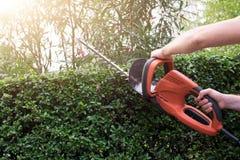 Gardener using an hedge clipper in the green garden stock photos