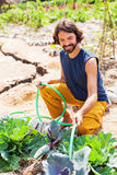 Gardener watering cabbage Royalty Free Stock Photography