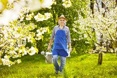Gardener watering can spade cherry tree frontal Royalty Free Stock Image