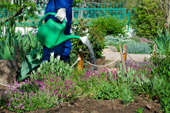 Gardener watering flowers Royalty Free Stock Photos