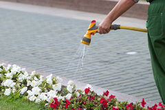 Gardener watering flowers with hose Stock Photography