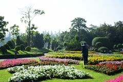 The gardener is watering the flowers at the park at Long 9 Park. Bangkok Thailand The beautiful flower garden. Public park at Suan luang Rama 9, Asia royalty free stock photos