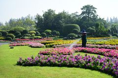 The gardener is watering the flowers at the park at Long 9 Park. Bangkok Thailand The beautiful flower garden. Public park at Suan luang Rama 9, Asia stock images