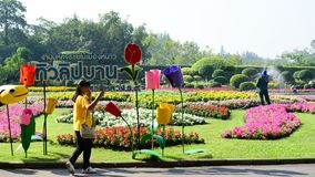 The gardener is watering the flowers at the park at Long 9 Park. Bangkok Thailand The beautiful flower garden. Public park at Suan luang Rama 9, Asia stock photos