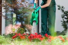 Gardener watering flowers Stock Photography