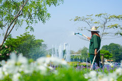 Gardener watering flowers in a small garden center Royalty Free Stock Photography
