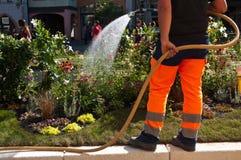 Gardener watering flowers Stock Image