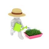 Gardener watering his plants Stock Image