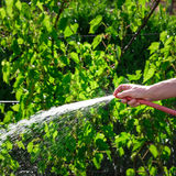 Gardener watering his vine plants Royalty Free Stock Photo