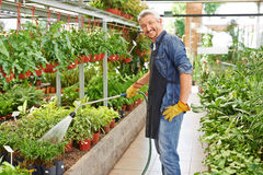 Gardener watering plants in nursery shop Stock Photography