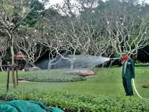 Gardener watering the trees in the tropical park Stock Photos