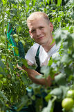 Gardener wearing gloves among tomatoes Stock Images