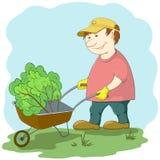 Gardener with wheelbarrow. Man gardener works in a garden, rolls a wheelbarrow with a plant Stock Image