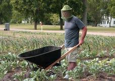 Gardener with a wheelbarrow Stock Photography