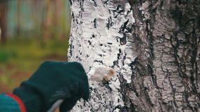 Gardener Whitewash Tree Trunk with Chalk in Garden, Tree Care in Spring. Slow Motion stock footage