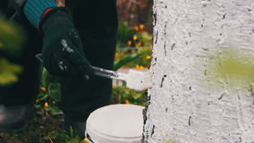 Gardener whitewash tree trunk with chalk in garden, tree care in spring. Gardener woman cares for the trees on the street in the park stock video footage