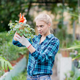 Gardener woman with flower pot Royalty Free Stock Images