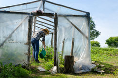 Gardener woman with watering plants in greenhouse Stock Photography