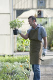 Gardener at work Stock Photography
